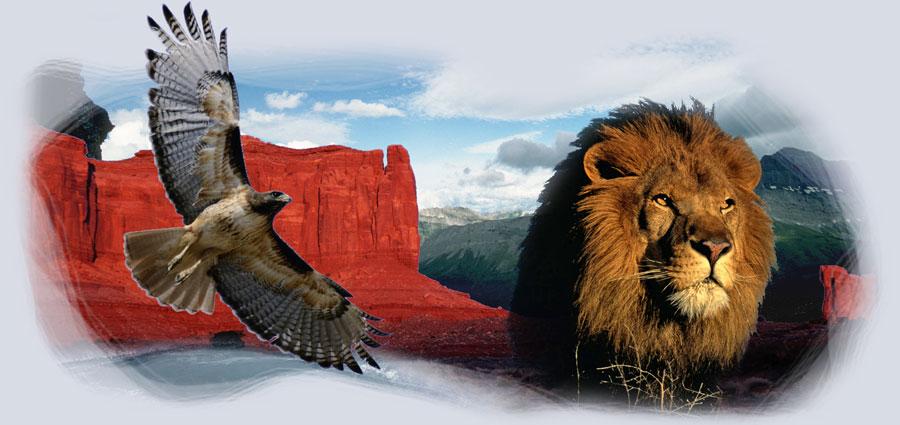 http://www.usclionvolleyball.com.au/wp-content/uploads/2013/05/lion-lightning-hawk.jpg